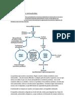 6-Transcripción Catabolismo de los aminoácidos remasterizada