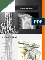 Huesos y musculos del brazo anterior