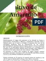 Cultivo de Amaranto