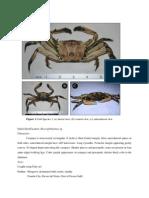 Crab ID