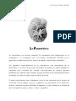 2. Foramin+¡feros