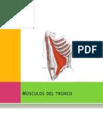 Anatomia Tronco