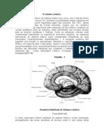 Trabalho de Anatomia e Fisiologia Do Sistema Limbico