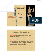 Anat Esqueletico