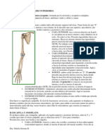 Esqueleto Extremidades Superiores e Inferiores