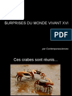 Surprises Du Monde Vivant XVI