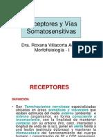 FISIOLOGIA RECEPTORES