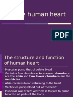 1.2 the Circulatory System - The Human Heart