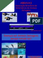 Animais Silvestres PDF