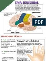 Sistema Sensorial 2012