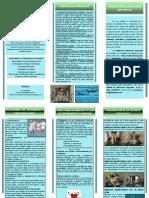 FOLLETOS INFORMATIVOS CONJUNTOS UNIDAD DE VALORACIÓN DEPORTIVA