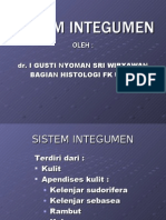 Sistem Integumen