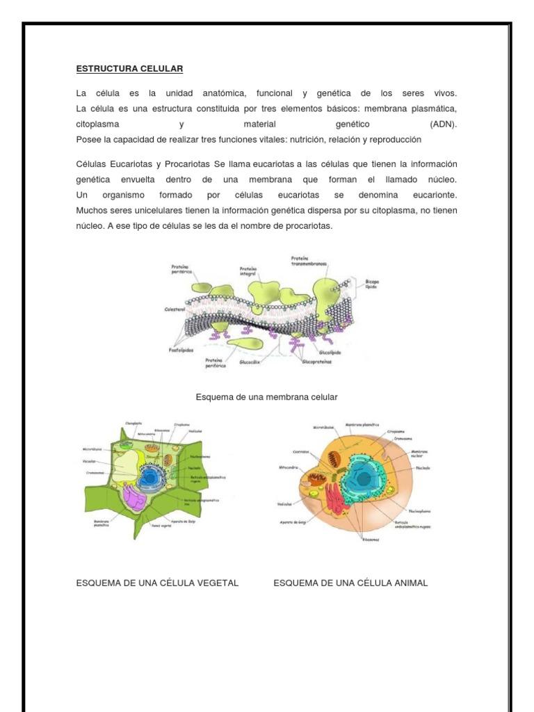 1 Estructura Celular