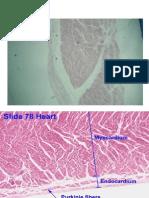 jantung histologi ppt