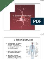 El Sistema Nervioso (Biol2151)