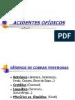 acidentes-ofdicos-1232917931336669-3