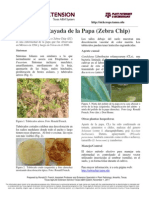 Mancha Rayada de la papa (Zebra Chip)