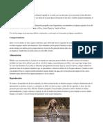 Animales Bioparque
