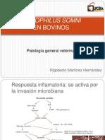 Histophilus somni