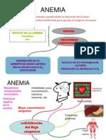 04 Anemias Por Deficiencia