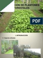 Producción de plantones (C-4)