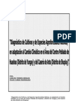 Diagnostico de Cultivos y Forestales Yungay