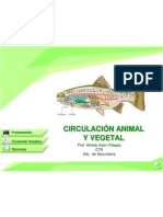 Circulacion Animal Vegetal (1)