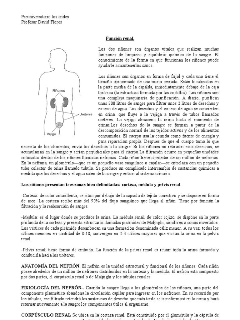 Excepcional Anatomía De Un Arco Compuesto Colección - Imágenes de ...
