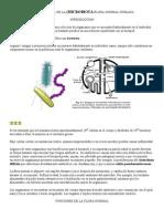 Microbiologia de La Flora Normal Humana