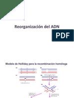 6- Recombinacion Genetica + Elementos Geneticos Moviles_ ADN Movil