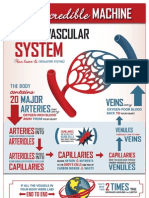 THI Incredible Machine Cardiovascular System