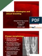 Wheat Breeding.