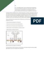 Activacion de Linfocitos b y Reaccion de Centro Germinal