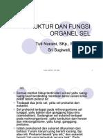 SEL1prokarioteukariotstrukturdanfungsimembransel (1)