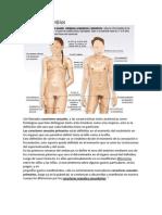 Funcionamiento de Los Aparatos Sexuales y El Sistema Glandular