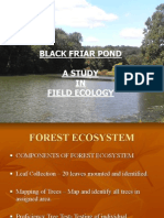 Forest+Ecosystem