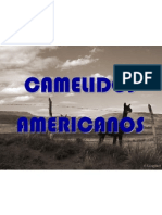 FIBRA CAMELIDO AMERICANO