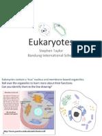 2.3-eukaryotes
