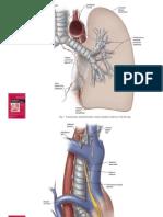 Anatomia de Torax-2da Parte