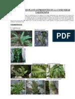 botánica guía visual de plantas y helechos de la comunidad valenciana (i)118
