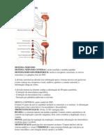 Sobre Neurofisiologia