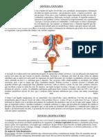 Resumo Fisiologia Humana