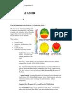 Neurology of ADHD