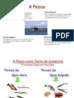 121 Pesca