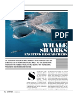 Whale Sharks exciting Researchers