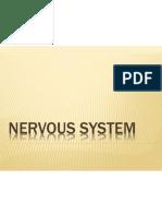 Nervous System (New)