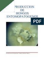 Pasos de reproducción de los hongos entomopatogenos
