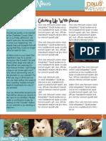 Paws4Ever Newsletter Design