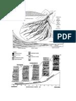 Estratigrafía de ambientes sedimentarios