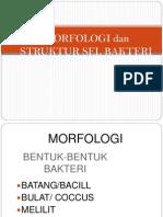 3.Morfologi Dan Struktur Sel Bakteri